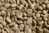 Why Green Coffee Beans Are A Bargain
